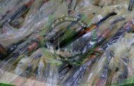 ضبط شحنة أسلحة شرقي عدن