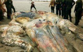 ظهور كائن غريب في ساحل أبين بالعاصمة عدن (صور)