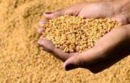 خلال 7 أشهر.. منظمة الفاو: 3.7 مليون طن واردات اليمن الغذائية