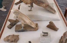 """الكشف عن """"متحف كامل"""" يضم مومياوات أسود وتماسيح وطيور"""