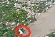 تفاصيل جديدة حول حقيقة الجثة التي تم الرمي بها بمقبرة السعيد في تعز