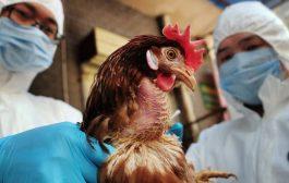 وفاة شخصين بأنفلونزا الطيور في الاعبوس واصابة اخرين