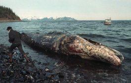 تحذيرات من وقوع أكبر الكوارث البيئية في التاريخ في البحر الأحمر